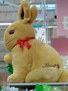 Un lapin géant