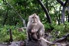 Un macaque et son petit