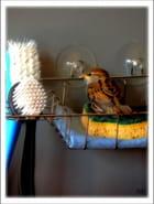 Un moineau s'invite dans ma cuisine...MM