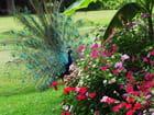 Un paon et des fleurs.