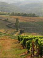 Un petit air de Toscane, dans le Beaujolais