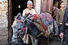 Un petit âne joliment harnaché et son maître