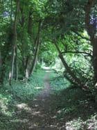 Un petit chemin dans les bois