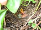 Un petit nid douillet