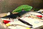 Un petit requin pour dîner?