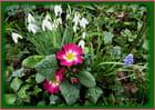 Un petit trio de fleurs pour égayer votre week-end