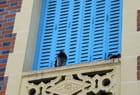 Un pigeon à la fenêtre