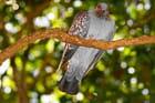 un pigeon  sur une branche