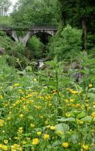 Un pont, des fleurs