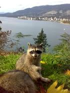Un Raton a Vancouver