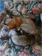 Un renard parfaitement naturalisé