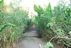 un sentier du Jardin d'Eden