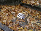 Un simple nom parmi les feuilles mortes