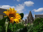 Un tournesol à l'abbaye