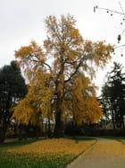 un très bel automne