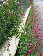 Un trottoir joliment fleuri