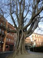 un vieil arbre bien blessé