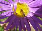 Quelle chance pour la ruche