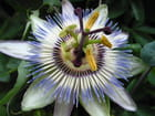 Une belle fleur