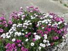 Une brassée de fleurs