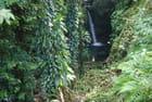une cascade dans la forêt de l'ile de la Dominique