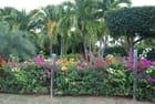 une clôture fleurie