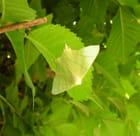 Une feuille parmi les feuilles