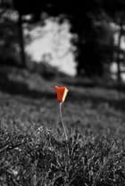 une fleur bien seul