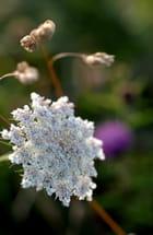 Une flore variée