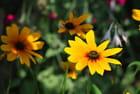 Une jolie fleur.....