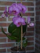 une orchidée parmi tant d' autres