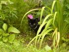 Une  panthère dans mon jardin