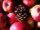 Une pomme....de pin