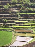 une riziére