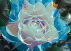 Une rose bleu pour voir la vie en rose