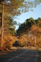 une route Landaise en automne