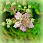Une simple fleur....