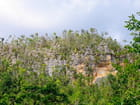 Vallée de Vinales avec les Mogotes