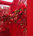 variations rouges à la fête des fleurs