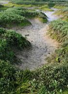 Vasiere à marée basse
