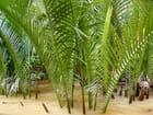 Végétation du delta