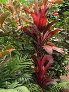 Végétation luxuriante...