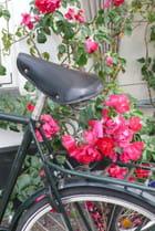 Vélo romantique