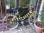 Vélo salamandre