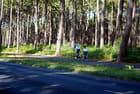 vélos dans la forêt Landaise