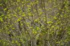 Verdures de printemps