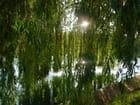 Vert sur l'eau