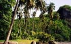 Verte forêt