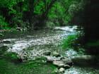Verte rivière