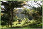 Verts tropicaux